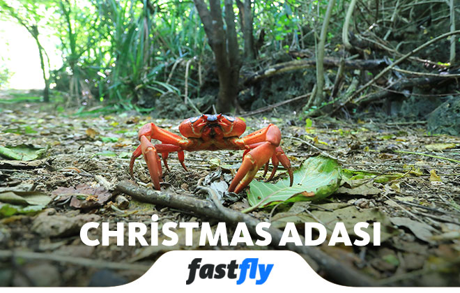 christmas adasına nasıl gidilir