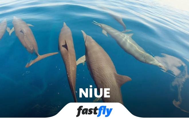 niue yunus balina gözlem noktaları